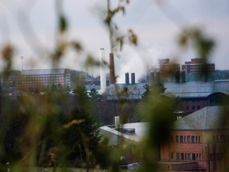 university seen through its weeds
