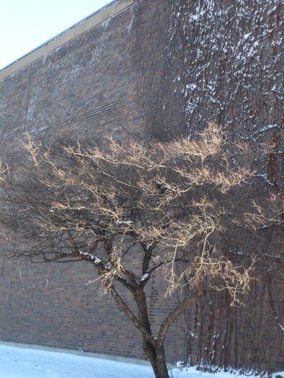 tree-and-wall