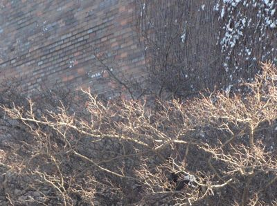 Wall and tree closeup