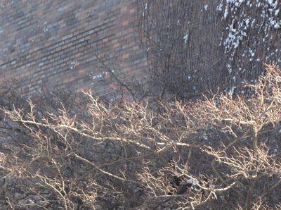 Wall and tree closeup
